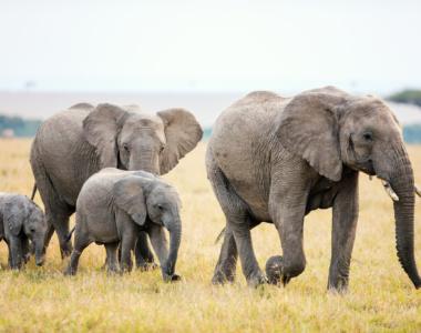 safari rejser
