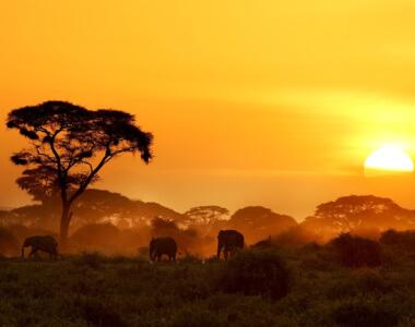 Solnedgang i Amboseli Afrika